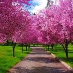 Springtime Asphalt Repair Service